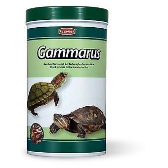 Padovan Gammarus Mat (Reptiler, Reptilmat)