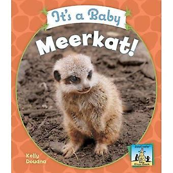 It's a Baby Meerkat! (Sandcastle: Baby African Animals)