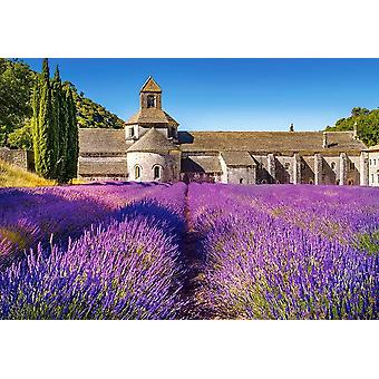 Castorland Lavender Field in Provence Jigsaw Puzzle (1000 Pieces)