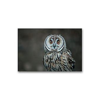 Søt kort-eared ugle plakat -bilde av Shutterstock