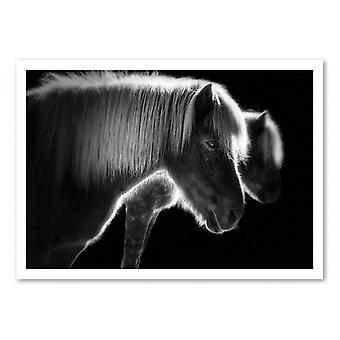 Art-Poster - Pony 50 x 70 cm