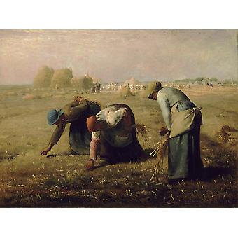 The Gleaners, Jean Francois Millet, 50x37cm