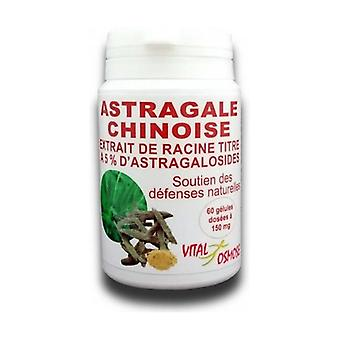 Chinese Astragalus, root extract 60 capsules