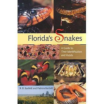 Floridas ormar: en Guide till deras identifiering och vanor