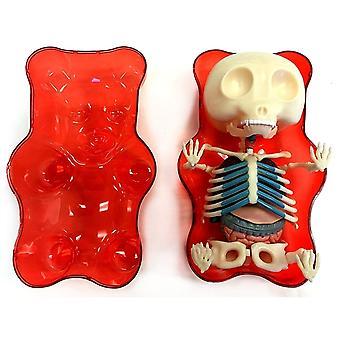 Modelo de anatomía del oso Gummi rojo