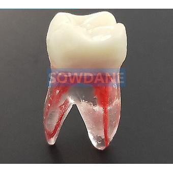 1:1 Hars Dental Endodontic For Student Study - Practice Operation Model
