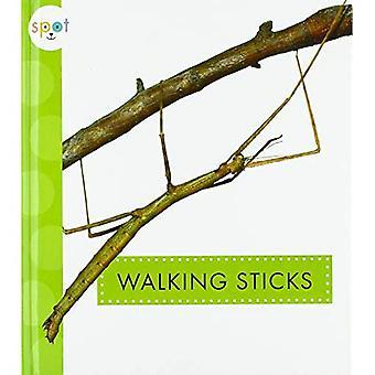 Walking-Stöcke (Spot Krabbeltiere)