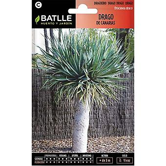 Batlle Canary Dragon Tree (Garden , Gardening , Seeds)