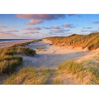Fondo de pantalla Mural Dunes Sunset I
