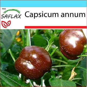 Saflax - coffret cadeau - 10 graines - poivre - Sweet Chocolate x - Paprika - Sweet Chocolate X - Peperoncino Sweet Chocolate - chocolat bonbon piment - Paprika - Sweet Chocolate