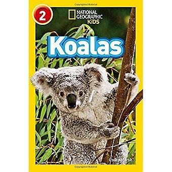 Koalas (National Geographic Leser)