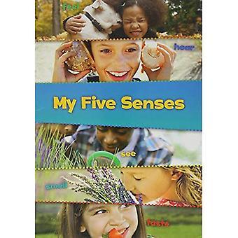 My Five Senses (These Are My Senses)