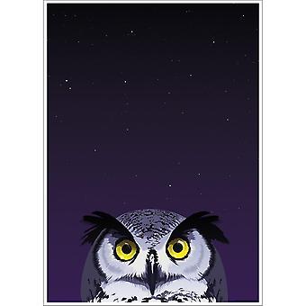 Inquisitive Creatures Owl Poster