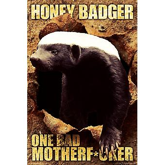 Poster - Honey Badger - One Bad Wall Art Licensed Gifts Toys 241112