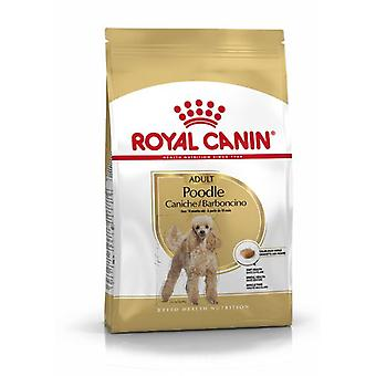 Royal Canin Poodle Adult (Dogs , Dog Food , Dry Food)