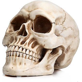 Koponya fej csont modell életnagyságú csontváz replika realista ember