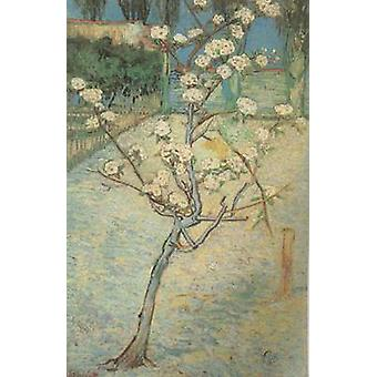 Blossoming Pear Tree, Vincent Van Gogh, 73x46cm