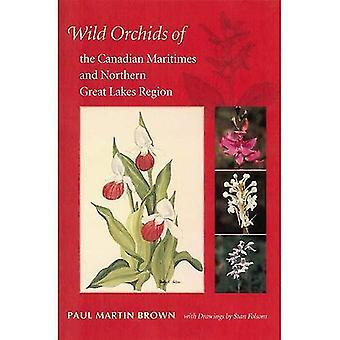 Orchidee selvatiche della regione settentrionale dei grandi laghi e Canadian Maritimes