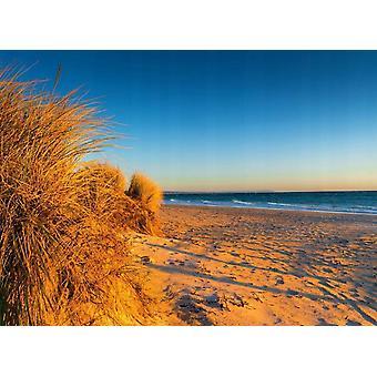 Tapeter väggmålning sanddyner Chelsea Beach Australien