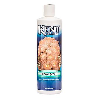 Kent Marine Coral Accel - 16 oz