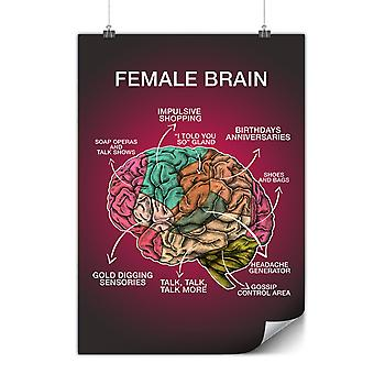 Matte or Glossy Poster with Female Brain Anatomy | Wellcoda | *y3480