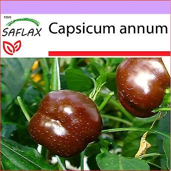 Saflax - 10 Samen - Pfeffer - Sweet Chocolate süße Schokolade x - Paprika - Sweet Chocolate X - Peperoncino Sweet Chocolate - Pimiento süße Schokolade - Paprika-