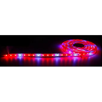 רצועת LED ספקטרום מלא עמיד למים לחממה הידרופונית