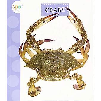 Krabber (Spot hav dyr)