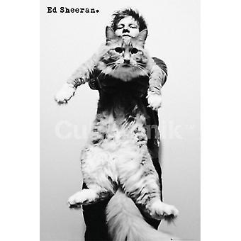 Ed Sheeran - Giant Cat affisch Skriv (36 X 24)