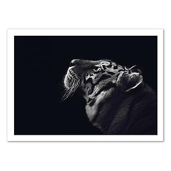 Art-Poster - Tigre Bianco e Nero - Julia Bénard 50 x 70 cm