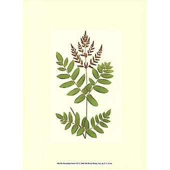 Woodland Ferns VII Poster Print by EJ Lowe (10 x 13)