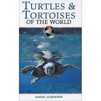 Sköldpaddor i världen