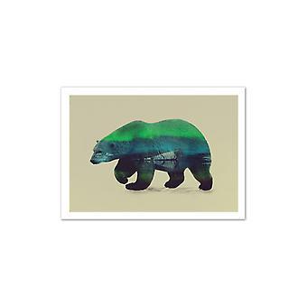 Art-Poster-ijsbeer-Andreas Lie 50 x 70 cm