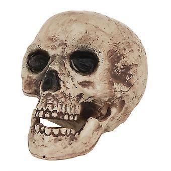 Cráneo grande