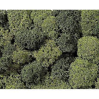 Moss NOCH 08610 Light green, Dark green