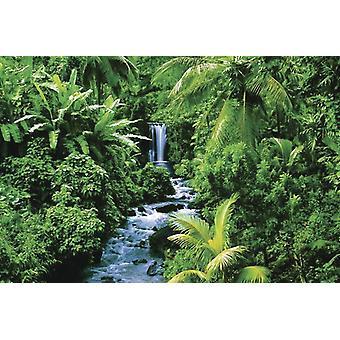 Regenwald Poster  Urwald mit Wasserfall