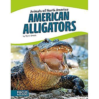 Alligators américains