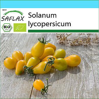 Saflax - Geschenkset - 10 Samen - Bio - Tomate - Gelbes U-Boot - BIO - Bio - Pomodoro - Gelbes U-Boot - Ecol'gico - Tomate - Submarino Amarillo - BIO - Tomate - Yellow Submarine