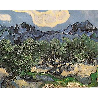 Olive Trees with the Alpilles in the Background, Vincent Van Gogh