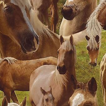 Dormitorio característica Rasch caballo marrón caballos Pony Wallpaper niños adolescentes de los niños