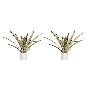 Decorum Duo 2 x Pineapple Champaca met Elho B. voor zacht wit - Hoogte 55 - Diameter pot 30