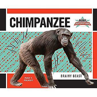 Chimpanzee: Brainy Beast (Animal Superstars)