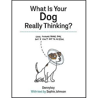 Quel est votre chien vraiment penser?