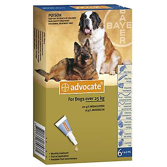 Advocate X Large Dogs Over 55lbs 6 Pack