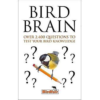 Cerveau de l'oiseau
