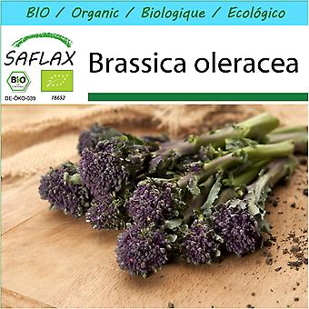 Saflax - Gift Set - 150 seeds - Organic - Broccoli - Early Purple - BIO - Brocoli - Early purple - BIO - Broccolo - Early Purple - Ecológico - Brócoli - Morado Temprano - Broccoli - Early Purple