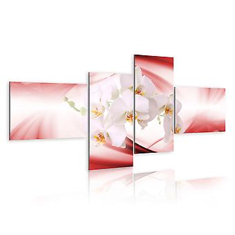 Quadro - Orchidea in rosa