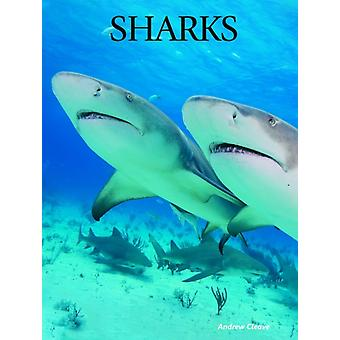 Sharks by Andrew Cleave