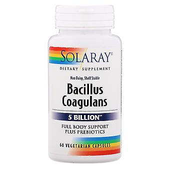 Solaray, Bacillus coagulans, 5 miljarder, 60 vegetariska kapslar