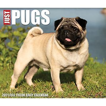 Pugs 2022 Box Calendar  Dog Breed Daily Desktop by Willow Creek Press